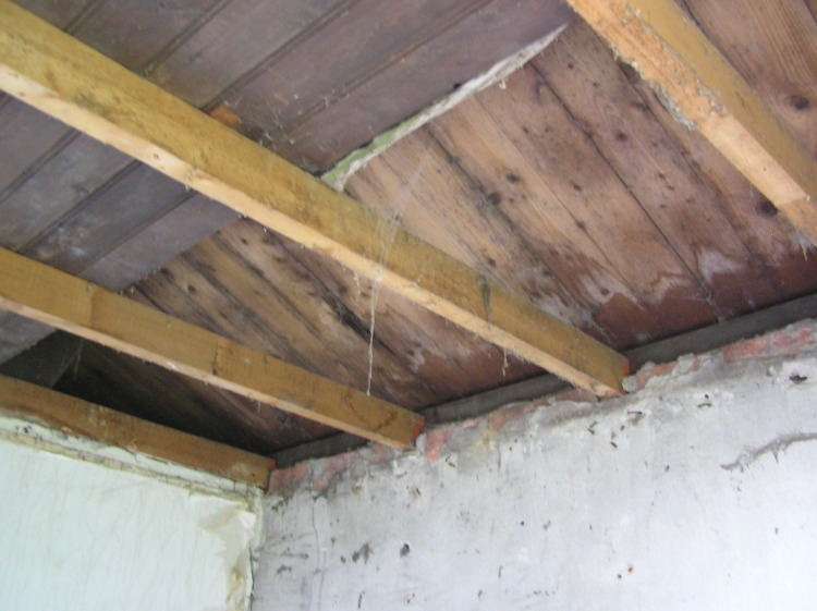 Roof infested with termites